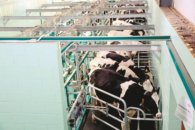 Свободният достъп до вода може да увеличи продуктивността на кравите със 7-8% без всякакви допълнителни разходи. А съкращаване на потреблението на вода ще намали млеконадоя с около 25%.