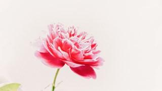 Най-красивото цвете - японска басня
