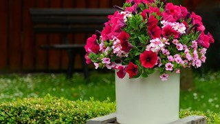 Грешки при отглеждането на саксийни цветя