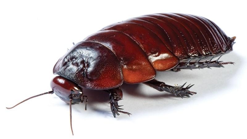 Хлебарките пропълзяват по отвори на вентилатори и климатици