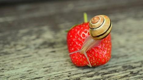 Slow Food - движението, което ни учи на наслада