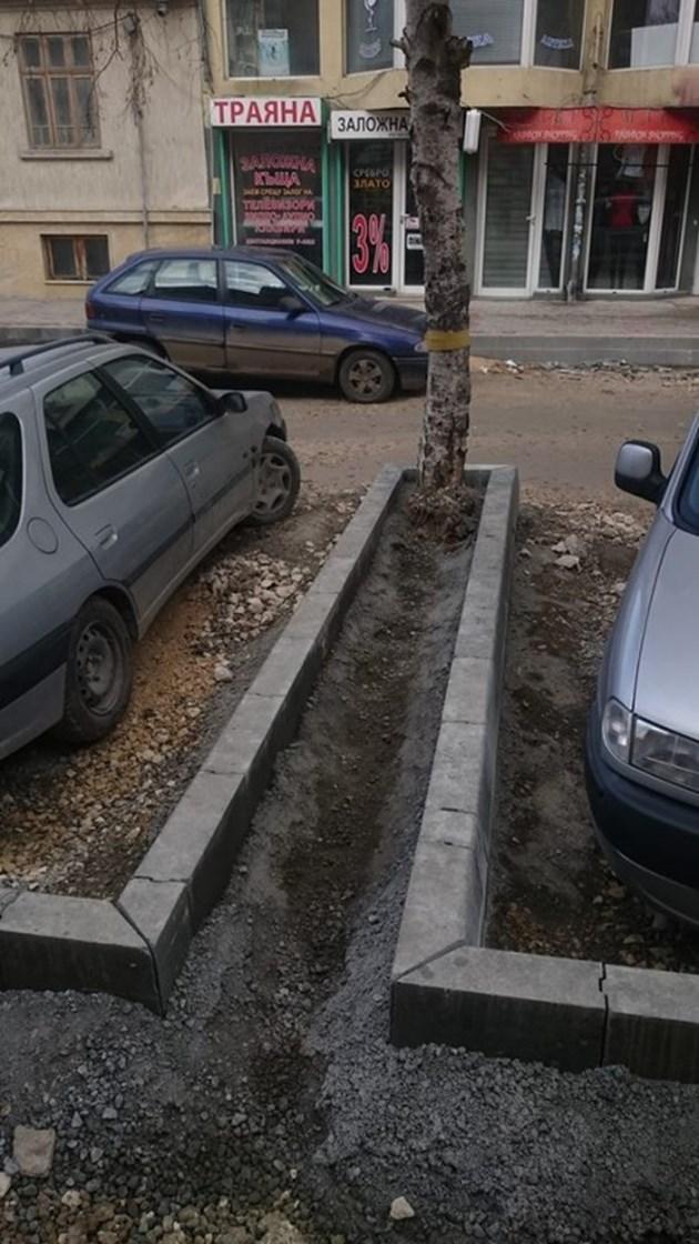 Бетонираха дървета във Варна
