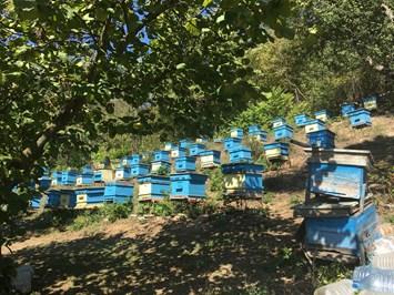 Започна приемът по пчеларската програма за 2021 г. и мярка COVID 3