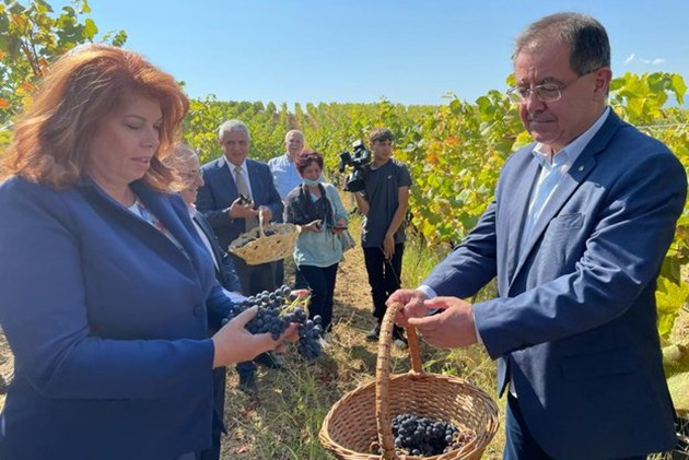Министър Бозуков: 20% повече грозде очакваме тази година
