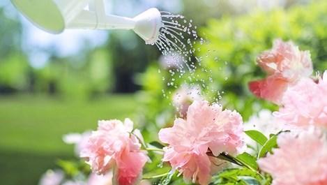 Какво е най-важното за поливането на цветята