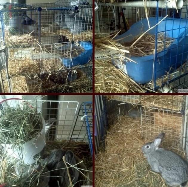 Осигурете комфорт за зимните зайци - мека постеля и уплътнени вратички