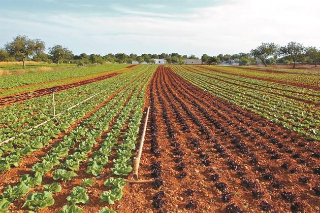 Обеззаразяването на почвата в зеленчуковите полета е сериозен проблем. Соларизация и биофумигация са алтернатива на химическите методи.