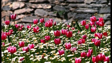 6 съвета за красива градина