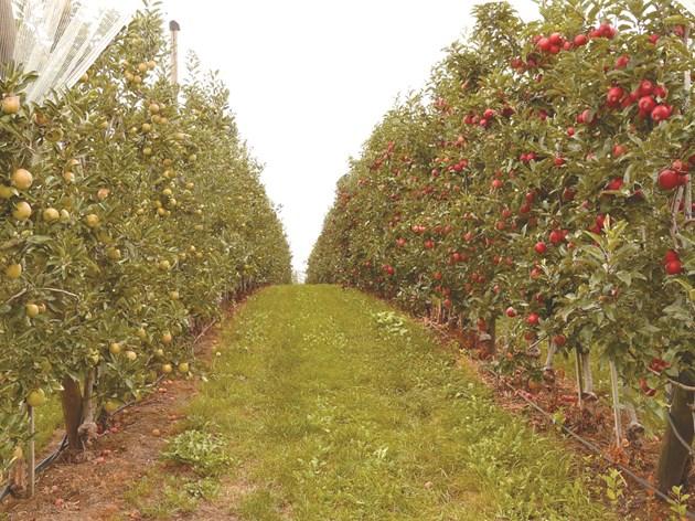Биологичното земеделие осигурява чиста храна, но и опазва биологичното разнообразие