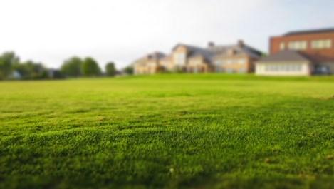 Как да имаме перфектната трева в двора