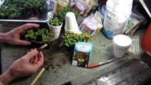 Цветно сандъче от семена