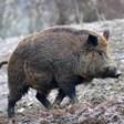 Изтеглят спорните промени за отрови и капани в ловния закон
