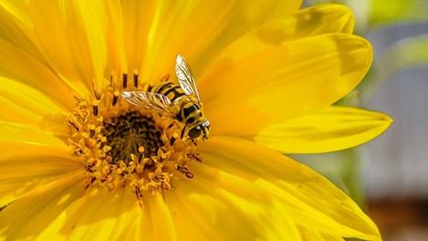 Пчелен восък при тези болести