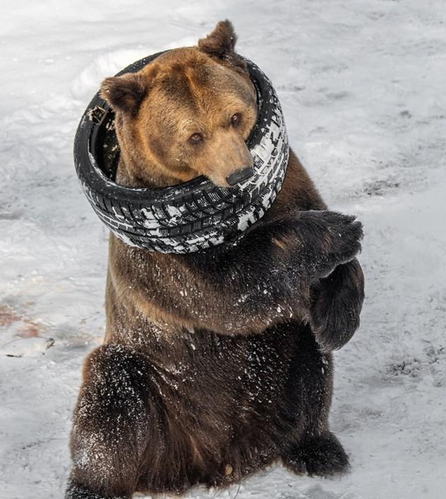 В софийския зоопарк: Мечките отказват да спят