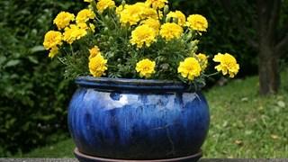 Народна медицина за цветята