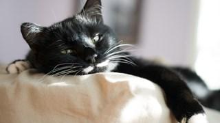 Как котката помага на здравето