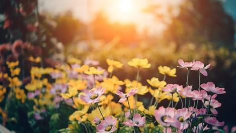 С този трик цветята цъфтят дълго време