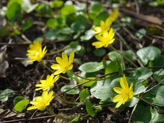 Преборете главоболието, подаграта и ревматизма с това растение (+рецепти)