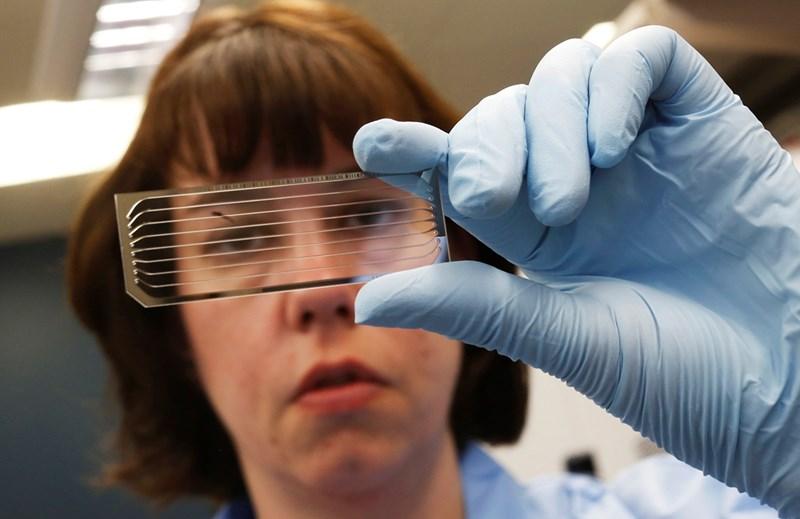"""Генетичка разглежда стъклен слайд с ДНК за секвениране. """"Разчитането"""" на гените все повече се използва за разбиране на причините за редки болести и търсенето на терапии."""