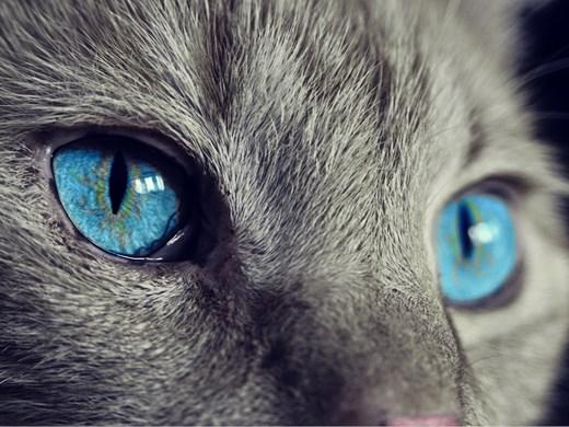 Проучване: Повече котки, отколкото кучета, са били изоставени през пандемията